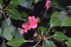 Blommor i Sri Lanka Royaltyfria Foton