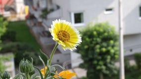 Blommor i staden Royaltyfri Foto