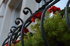 Blommor i staden av Lviv Arkivbild
