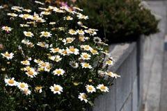 Blommor i stadsgatorna royaltyfri fotografi