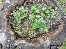 Blommor i stammen Fotografering för Bildbyråer