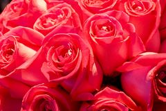 Blommor i supermarket Royaltyfria Foton
