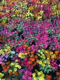 Blommor i supermarket Royaltyfri Bild