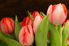 Blommor i supermarket Arkivfoto