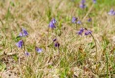 Blommor i tidig vårsäsong Arkivfoto