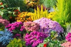Blommor i trädgård