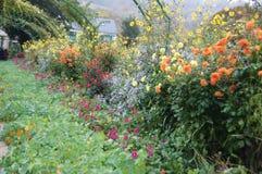 Blommor i trädgård för Monet ` s Arkivfoto
