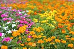 Blommor i trädgård kan vara till bakgrund Arkivbild