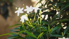Blommor i trädgård som de flyttar till luften arkivfilmer
