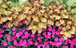 Blommor i trädgården royaltyfri foto