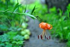 Blommor i trädgården arkivfoton