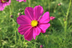 Blommor i trädgården Royaltyfri Bild