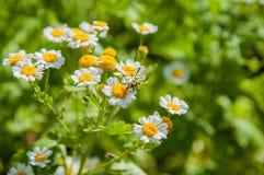 Blommor i trädgården Royaltyfri Fotografi
