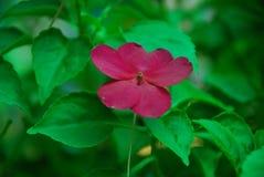 Blommor i trädgården Arkivbild