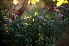 Blommor i trädgården Royaltyfria Bilder