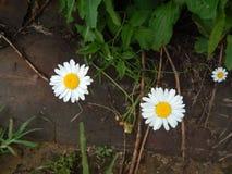 Blommor i trädgården royaltyfria foton