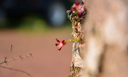 Blommor i trädgården och det lilla djuret fotografering för bildbyråer