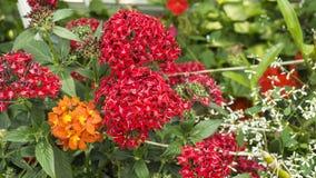 Blommor i trädgården skyen för showen för växter för rörelse för den förfallna för fältet för blueoklarhetsdagen ligganden för fo Arkivfoto