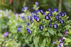 Blommor i trädgården som är suddig Royaltyfria Bilder