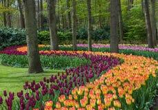 Blommor i trädgårds- Keukenhof Nederländerna Fotografering för Bildbyråer