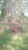 Blommor i trädstammen royaltyfri fotografi