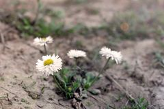 Blommor i tr?dg?rden asteria arkivbild