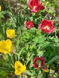 Blommor i tr?dg?rden arkivfoto