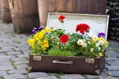 Blommor i valise Royaltyfria Foton