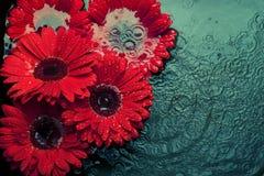 Blommor i vatten Royaltyfri Bild