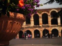 Blommor i Verona Fotografering för Bildbyråer