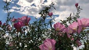 Blommor i vind lager videofilmer