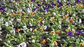 Blommor i vinden arkivfilmer