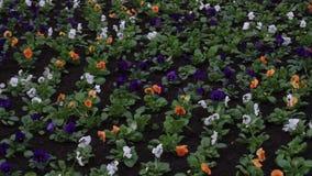 Blommor i vinden lager videofilmer
