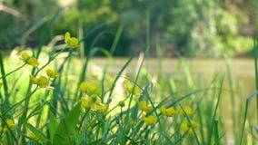 Blommor i vinden i ultrarapid lager videofilmer