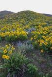 Blommor i Wenatchee fotografering för bildbyråer