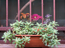Blommor inomhus och utomhus Fotografering för Bildbyråer