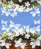 blommor inramniner nätt avståndstextwhite Stock Illustrationer