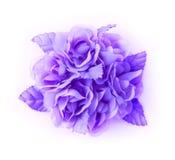 blommor isolerad lila Royaltyfri Foto