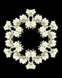 blommor isolerade jasminkaleidoscopen Royaltyfria Bilder