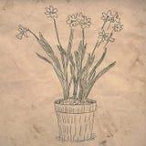 blommor isolerade krukawhite stock illustrationer