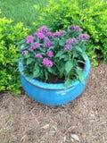 blommor isolerade krukawhite Arkivfoto