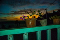 blommor isolerade krukawhite Solnedgång Apo-ö, Filippinerna Royaltyfria Foton