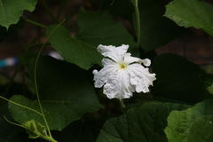 blommor kalebasser Royaltyfria Bilder
