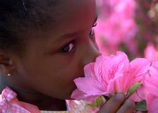 blommor kan Royaltyfria Foton