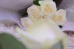 Blommor kan se skillnaden royaltyfri foto