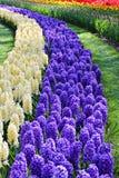 Blommor like en flod Fotografering för Bildbyråer