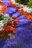 blommor like floden arkivbilder