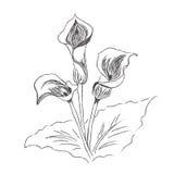 Blommor liljan, målning, skissar, vektorn, illustration Arkivbild