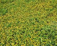 blommor little Arkivbilder