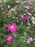 blommor little Arkivbild